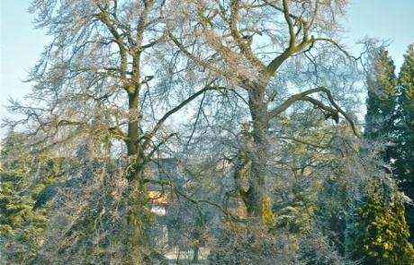 Grove House Gardens Trees