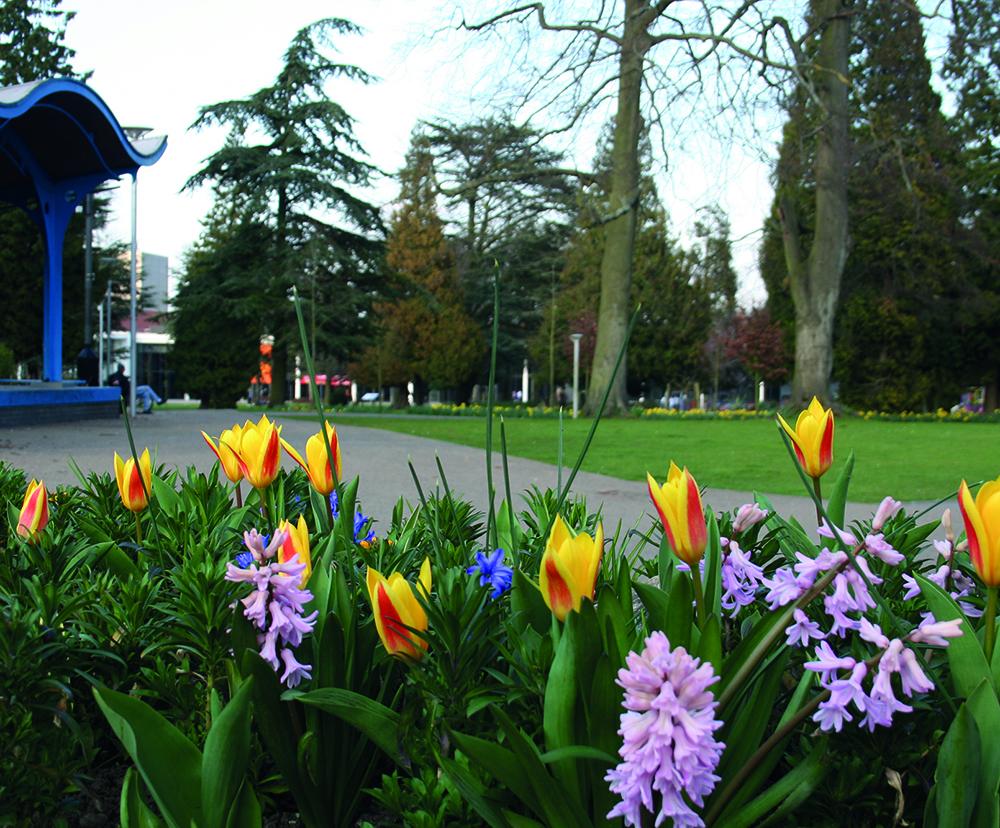 Flowers in Grove gardens